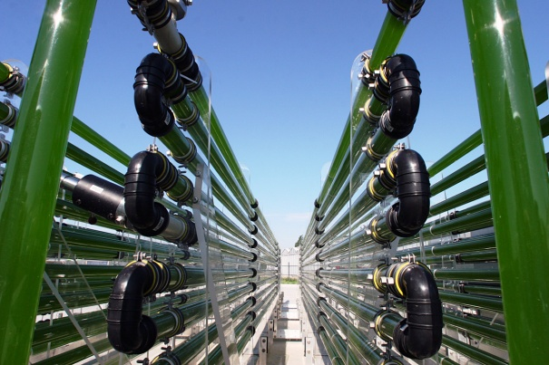 Why-not-algae-fuel-part-1